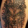 En varg som blir ett med skogen